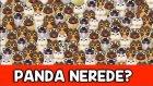 Panda Nerede? - 5 Saniyen Var - Resimli Dikkat Testi