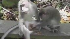 Kuşu Kalkmayan Maymunun Acı Dolu Bakışı