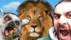 Melih Bir Günlüğüne Hayvan Bakıcısı Oldu - Aslan Besledi - Yılan Baktı