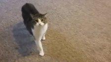 Komşusunun Kedisiyle Hayatının En Zor Dakikalarını Geçiren Adam