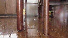 Saklanmaya Çalışan Papağan