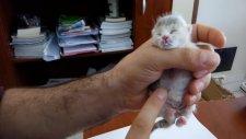 Şırıngayla Yavru Kedi Besleme