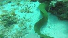 Yılan Balığını Görünce Suyun Altında Çığlık Basan Kadın