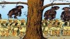 Osmanlı'nın Savaşçı Maymunları