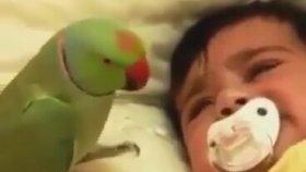 Papağan Bebeği Çıldırttı
