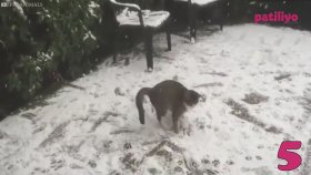 Kar Görünce Ne Yapacağını Şaşıran Şapşik Hayvanlar