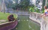 Hayvanat Bahçesinde Orangutanla Ticaret Yapan Turist