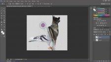 Adobe Photoshop CS6 Hayvan Manipülasyonu
