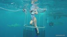 Köpek Balığı Saldırısına Uğrayan Erotik Yıldız