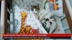 Sivas'ta Hamile Kedi Bebek Beşiğine Yavruladı