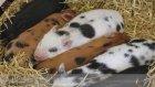 Zekalarıyla Çok Şaşırtan 5 Hayvan ve İnanılmaz Yetenekleri