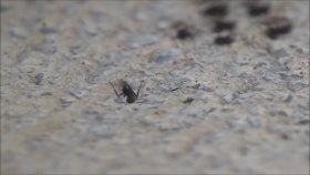 Çiyan yiyen karıncalar