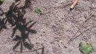 Düşük Bütçeli Belgesel : Örümcek vs Karınca