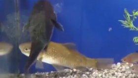 Yanlış Zamanda Yanlış Yerde Olan Balığın Kötü Sonu