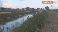 Adana'da Sulama Kanalında Erkek Cesedi Bulundu