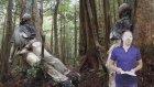 İntihar Ormanı Aokigahara