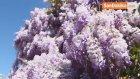 Doğa İçin Emek Verenler Kadıköy'de Buluşuyor