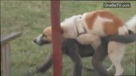 Köpek Maymuna Göz Dikmiş