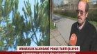 """Bin 600 Ağaç Kesilecek, 400 Villa Gelecek"""" - Bursa"""