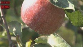 Elmaya Mıknatıs Yaklaştırdığınızda Ne Olur ?