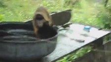 Çamaşır Yıkayan Maymun