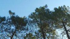 Sancaktepe Orman Parkı ve Mesire Alanı
