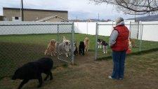 Sabırla Dışarı Çıkmak İçin İsimlerinin Söylenmesini Bekleyen Köpekler