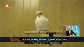 Zikir çeken kuş Nihat Hatipoğlu'nu mest etti!