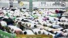Kabe İmamı Şeyh Maher Al Mueagly Harika Bir Akşam Namazı 09/Ekim/2015 HD