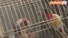 Cimbom İsimli Papağan, Galatasaray Adası'ndan Tahliye Edildi