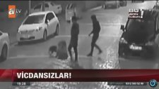 Sokak Köpeğine Pitbull Saldırtan İşkenceci Gençler