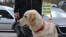 Rehber Köpekler Derneği Ve Yeryüzü Derneği'nin Hikayesi - Fark Yaratanlar 28 Mayıs 2017 Pazar