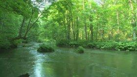 Erdem Özgen - Yeşil Ördek Gibi Daldım Göllere