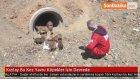 Kızılay Bu Kez Yavru Köpekler İçin Devrede