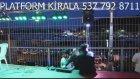 İftar Ramazan Platform Çadır Sahne Kiralama Dj Işık Ses Organizasyonları Doruk Platfom