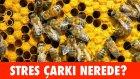 Stres Çarkı Nerede? - Tostçu Erol'u, Nusret'i Bul - Youtube Trendleri ile Dikkat Testi