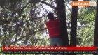 Ağaca Takılan Güvercin Dal Kesilerek Kurtarıldı