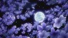 Bedirhan Gökçe - Küfrüm Edebini Aştı Bu Gece - Şiir