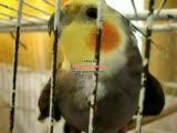 galatasaray fenerbahçe parrot papagan papağan cimb