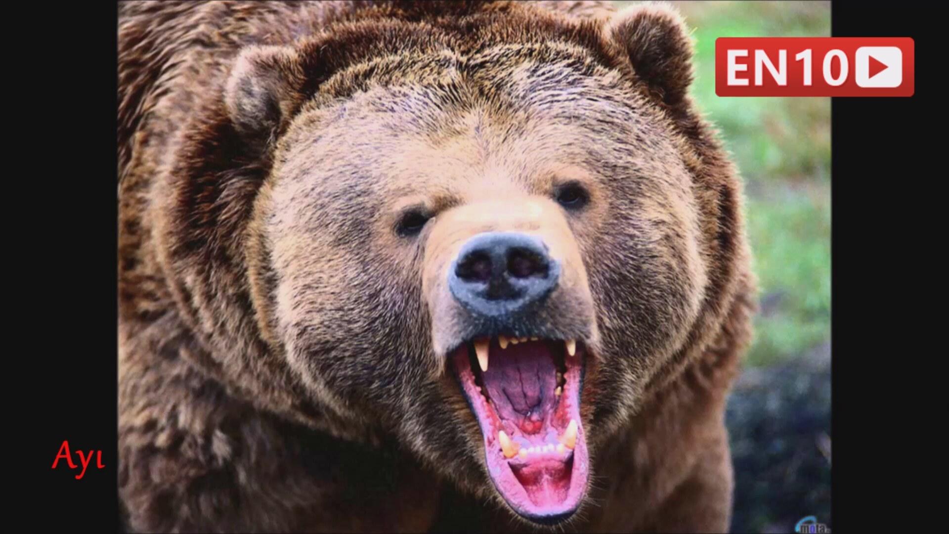 Dünyanın En Korkunç Ve ürkütücü 10 Hayvan Türü Izlesenecom