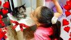 Yeni Kedimiz Ponçiğe Aldığımız Hediyeleri Veriyoruz Çok Tatlı Oldu !!