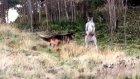 Kanguru Ve Alman Çoban Köpeğinin Karşılaşması