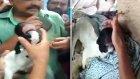 Hindistan'da Gözleri Olmayan Keçi Doğdu