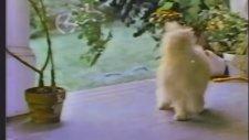 80'ler Amerikan Televizyon Reklamları