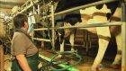 Hayvancılıkta Teknolojinin Geldiği Son Nokta