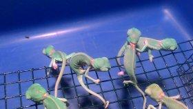 Yavru Bukalemunların Cırcır Böceği Avı