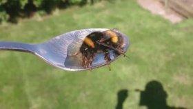 Arı Şurubu Nasıl Yapılır