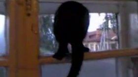 Havlayan Kedi