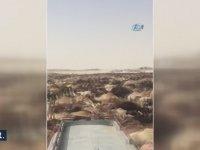 Diplomasiden Nasibini Alan Katar Develerinin Sınır Dışı Edilmesi