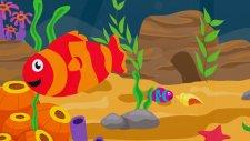 Kırmızı Balık Gölde Kıvrıla Kıvrıla Yüzüyor